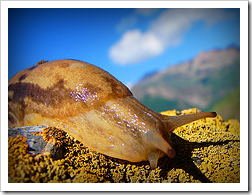 Snail in Harijan by Hamed Saber